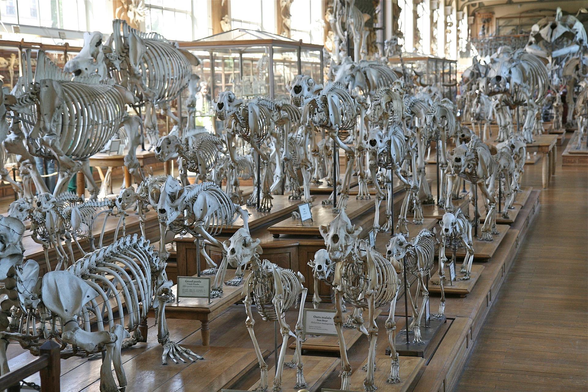 the Darwin museum