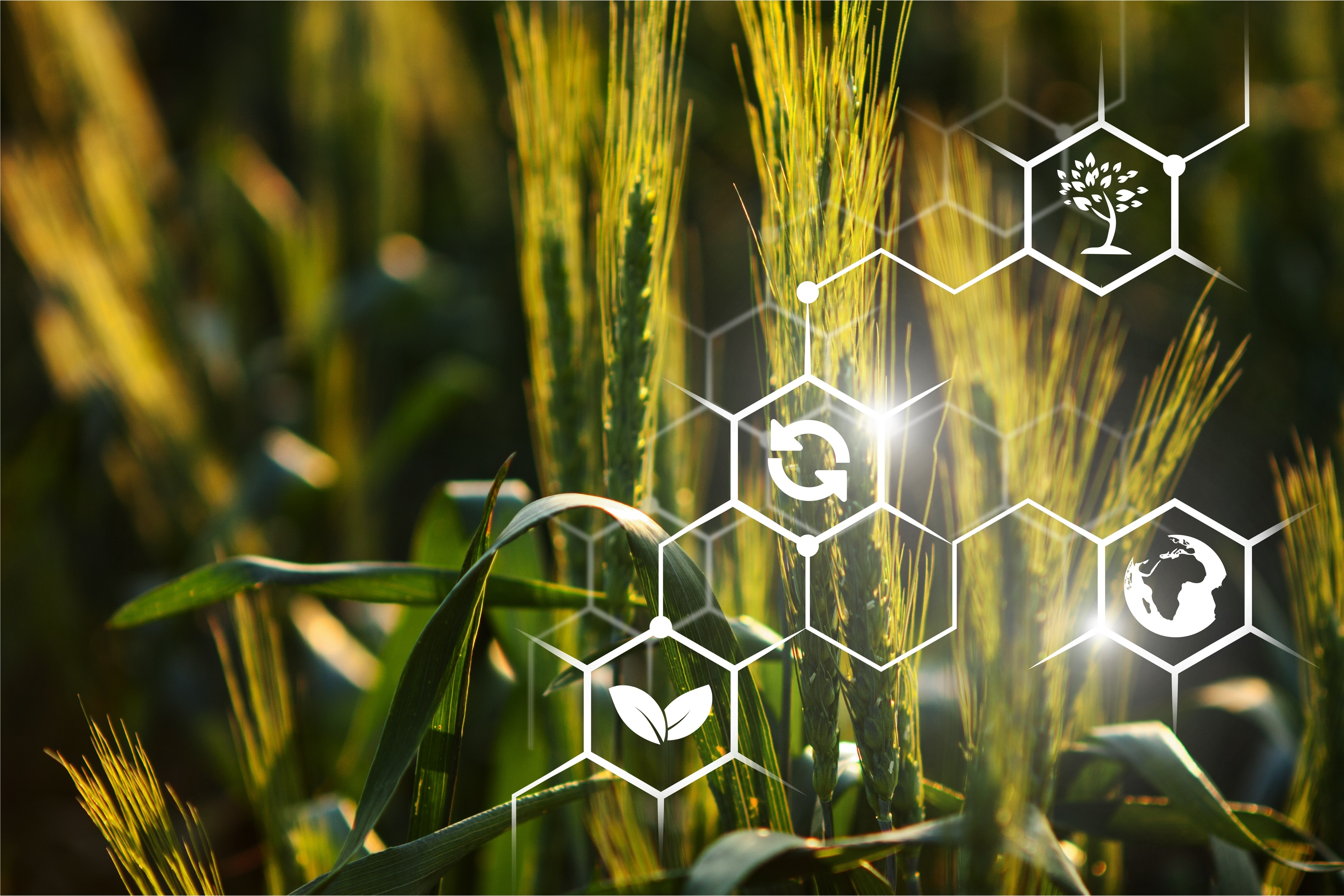 Real digital projects of the agro-industrial complex